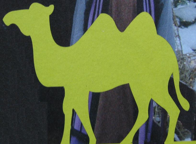 silhouette kameel