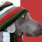 Gratis patronen hondenkleding groot en klein
