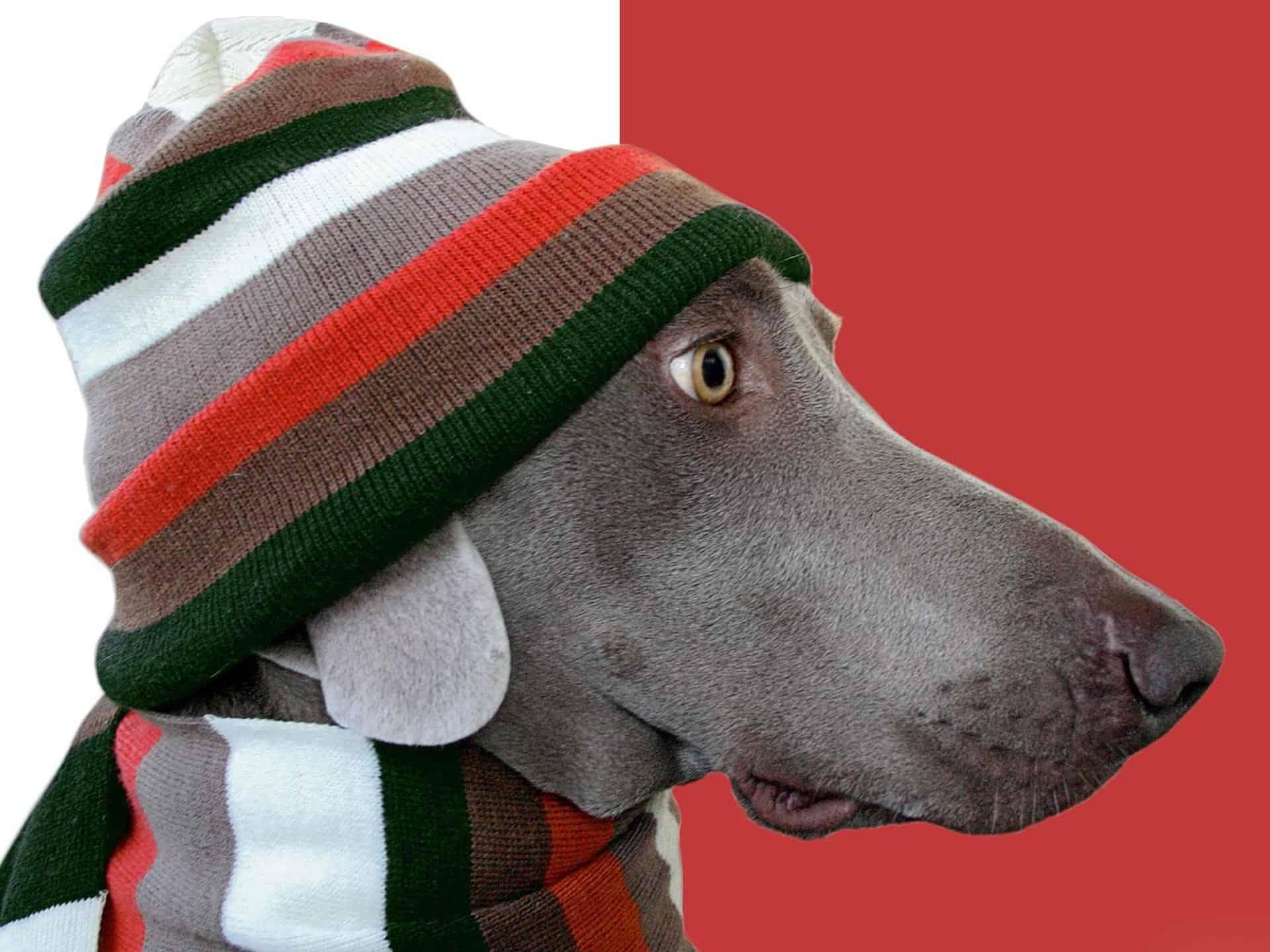 Gratis Patronen Hondenkleding Groot En Klein Hobbyblogonl
