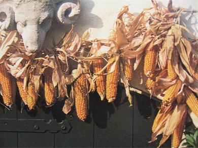 maiskolven drogen krans maken