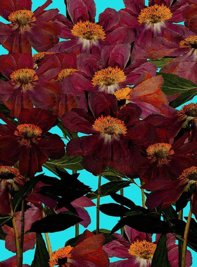 bloemen drogen en collage maken. Laat je inspireren bij : vlvi.nl