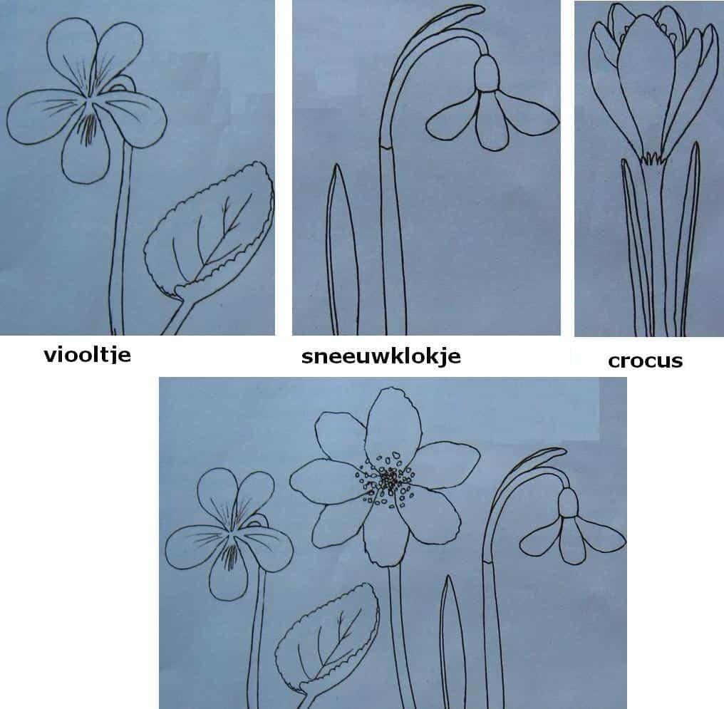 Simpel bloemen tekenen tips en voorbeelden