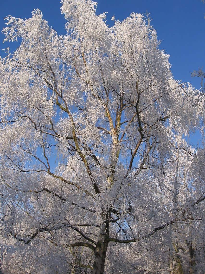 Clingendael winter 231207 026