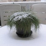 Terras en balkon groen in de winter