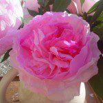 Papieren rozen maken