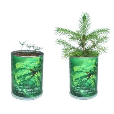 Kerstboom in blik is duurzaam alternatief