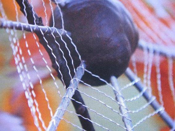 Hoe spinnenweb maken met kastanje