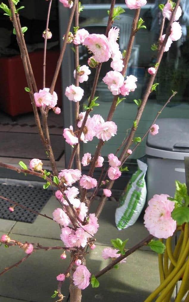 prunustak bloesemtak met rose bloemen zelf maken 2