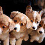 Tips voor (nieuwe) eigenaren van huisdieren