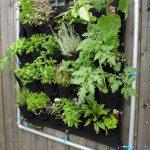 Verse kruiden bij de keuken op de muur van tuin, balkon of terras