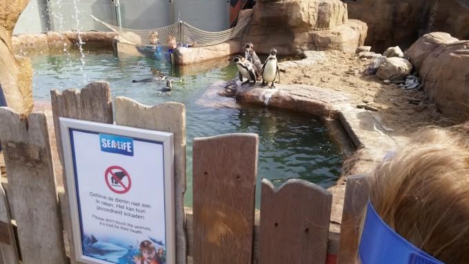 eropuit zee aquarium Scheveningen 3