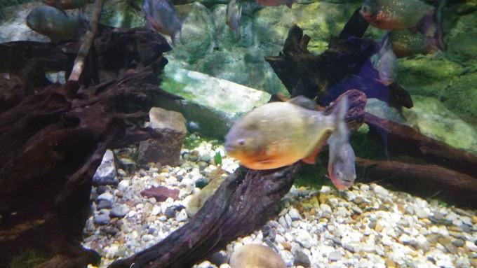 eropuit zee aquarium Scheveningen 6