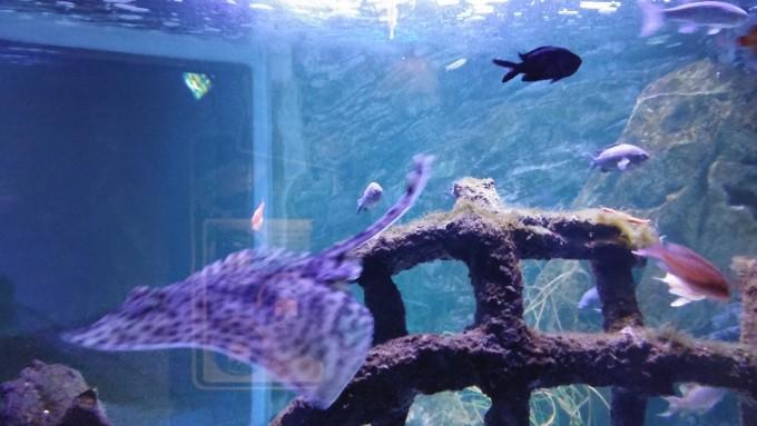 eropuit zee aquarium Scheveningen 8