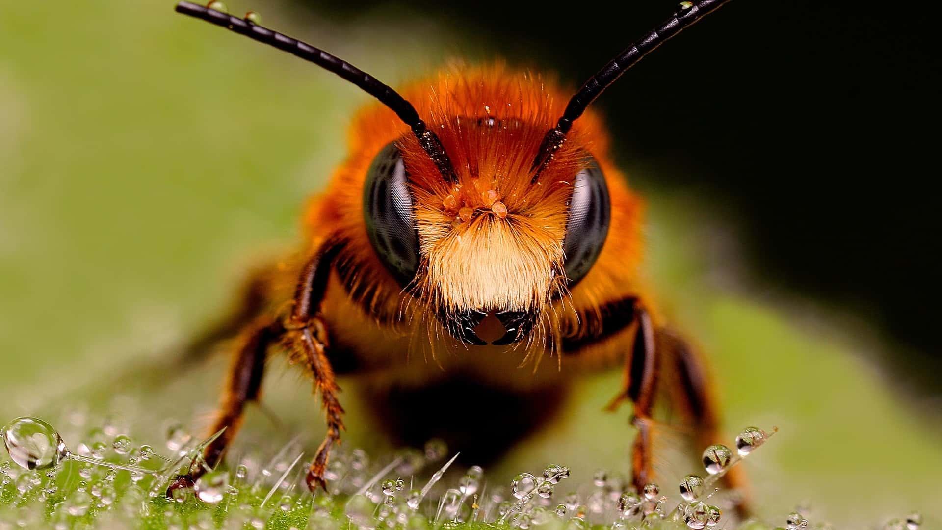 Insecten prepareren is ook een hobby