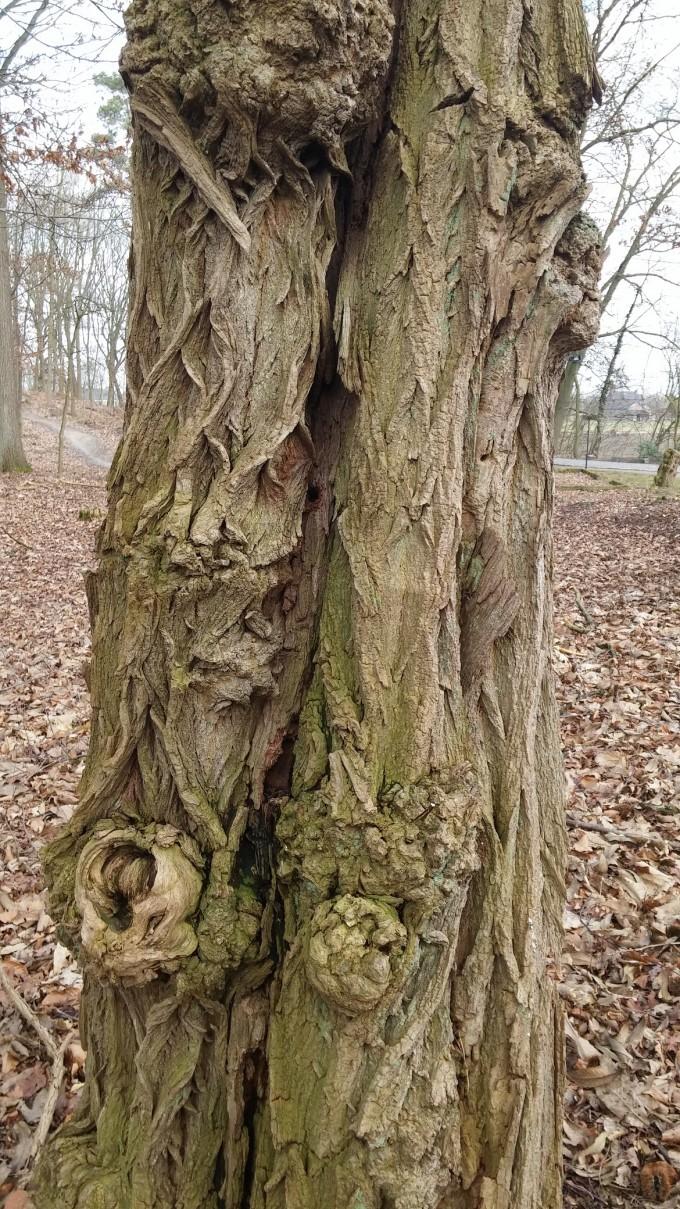 oude boom en inspiratie