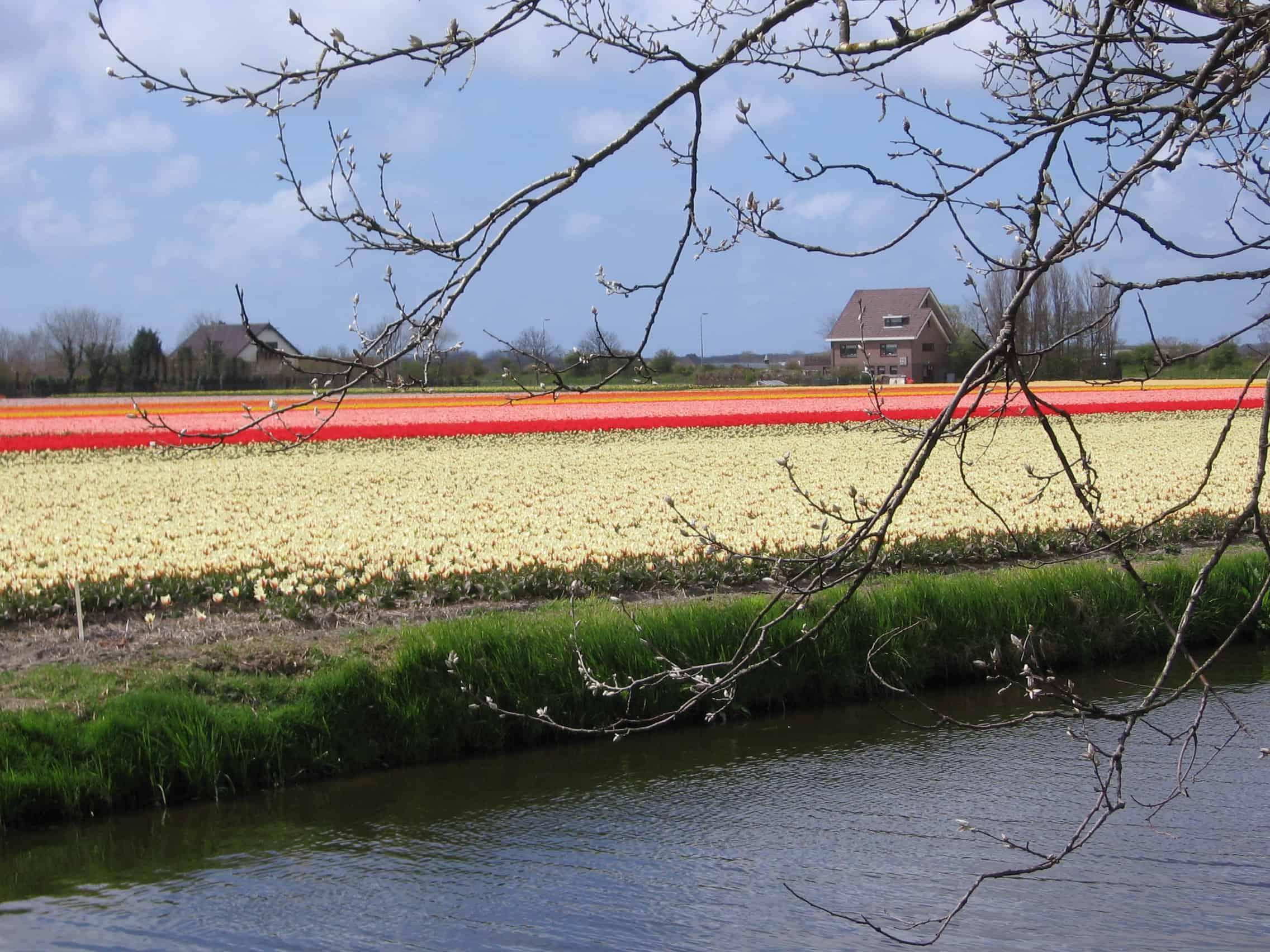 bloembollen bollenstreek (1)