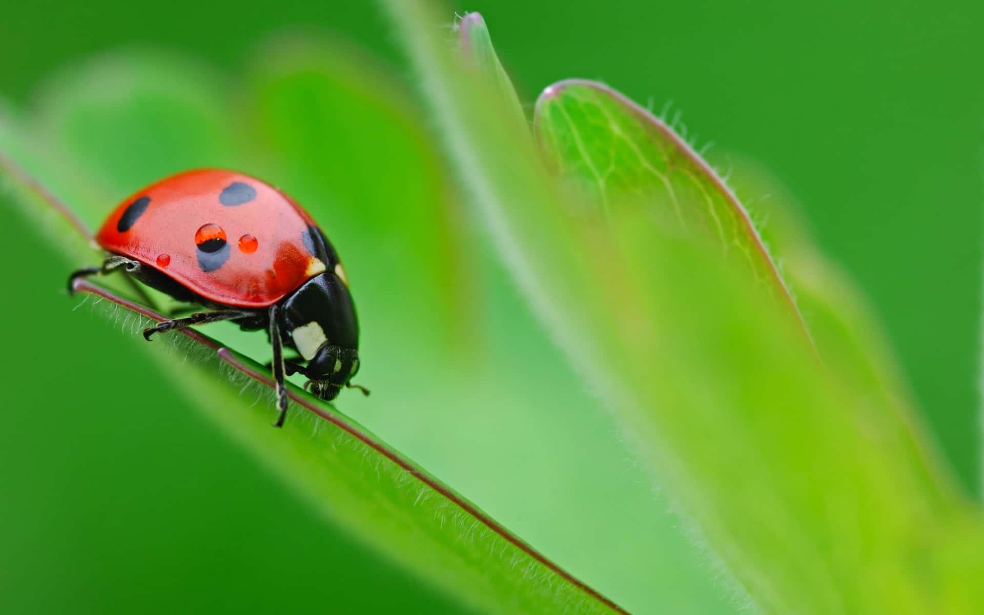 Peuters en kleuters leren insecten tekenen   Hobby blogo nl