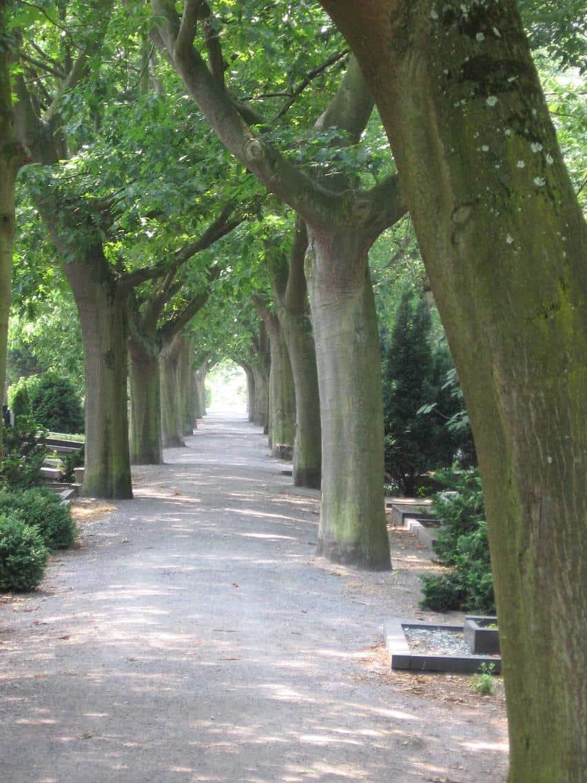impressie begraafplaats