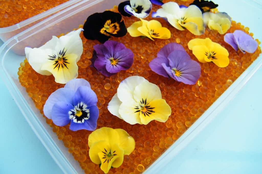 Bloemen en bladeren drogen doe je met deze tips