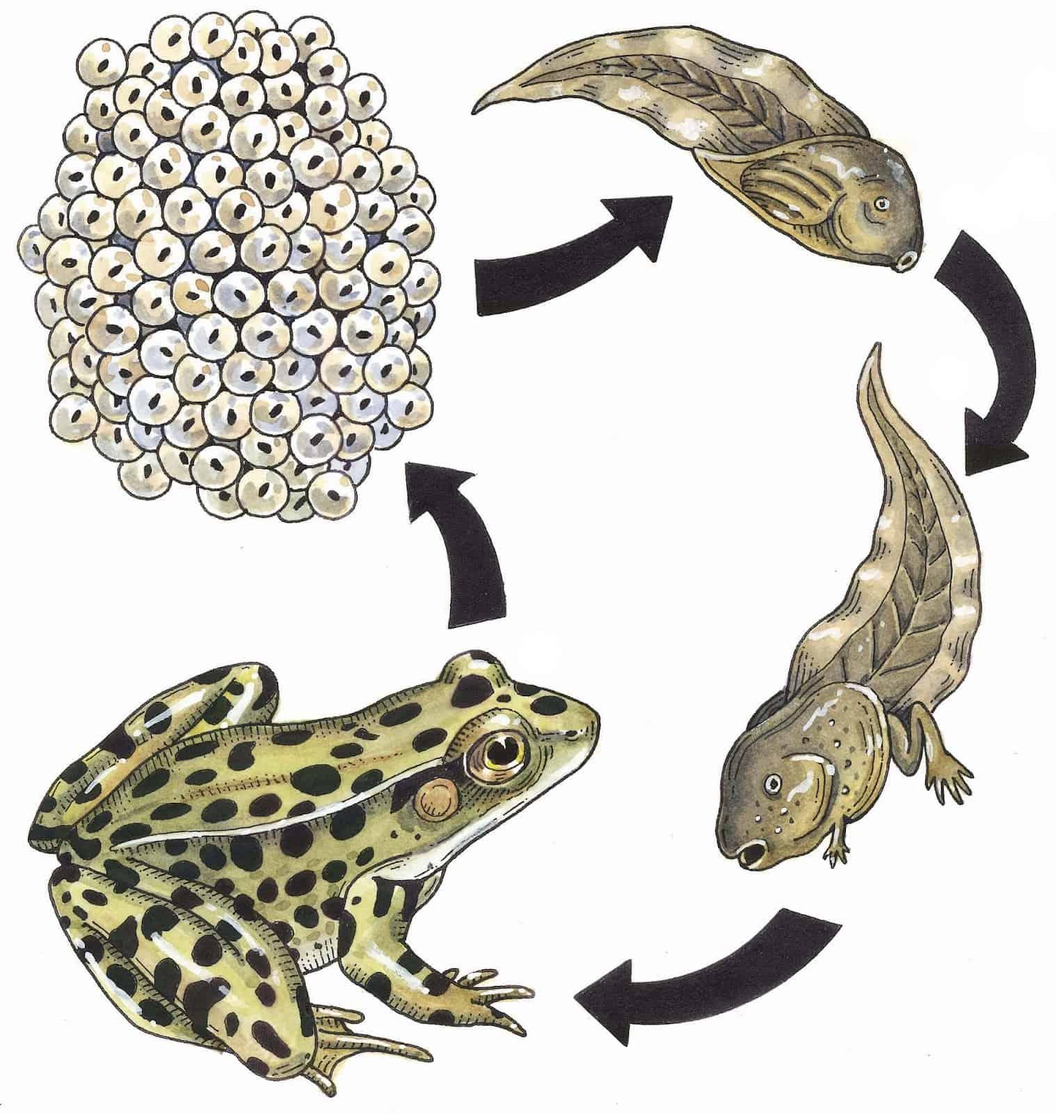 Bron: frogsjumpingcrazy.blogspot.nl