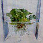 Mini vijver met waterplanten in huis