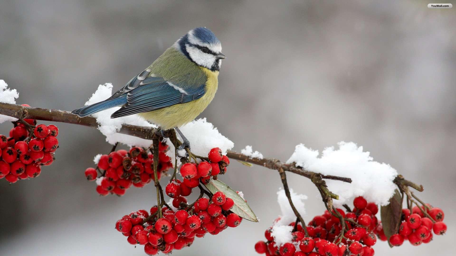 Vogelkrans Voor Vogels In De Winter