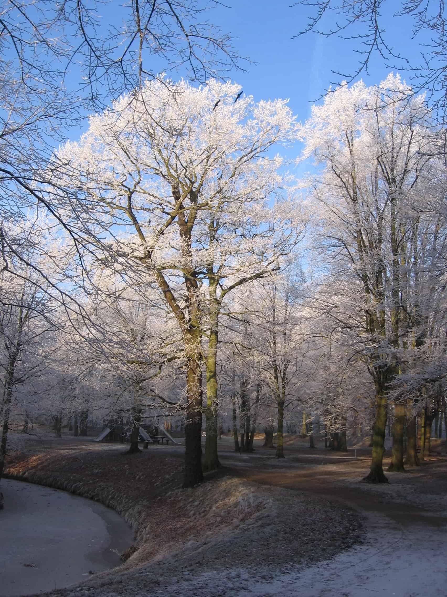 Clingendael in winter 231207 002