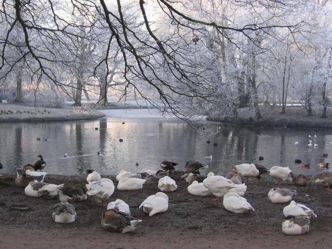 Clingendael winter 231207 003