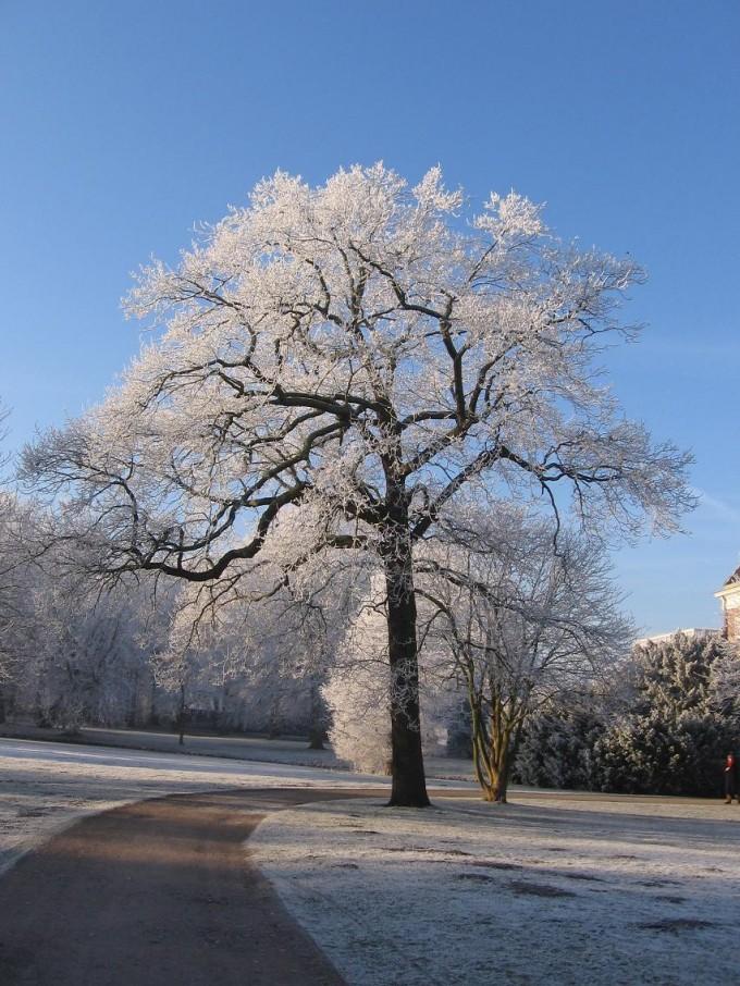 Clingendael winter 231207 006