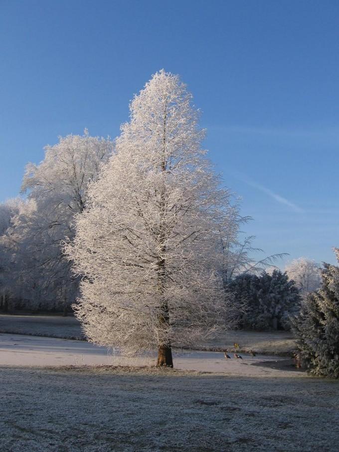 Clingendael winter 231207 008