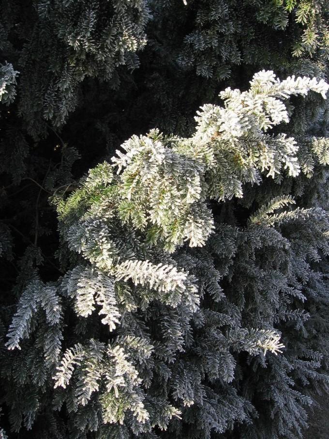 Clingendael winter 231207 010