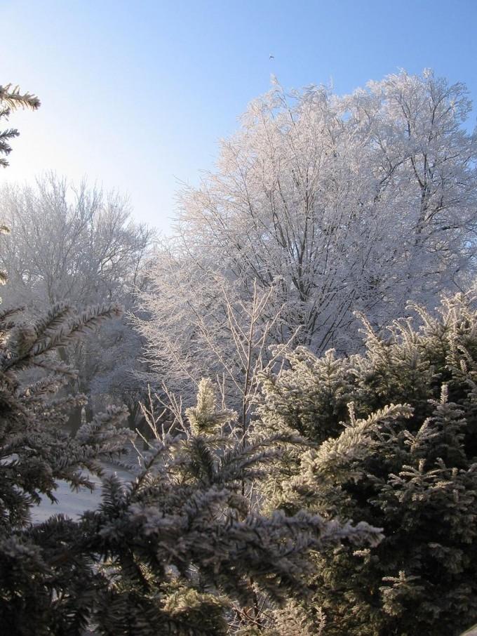 Clingendael winter 231207 014