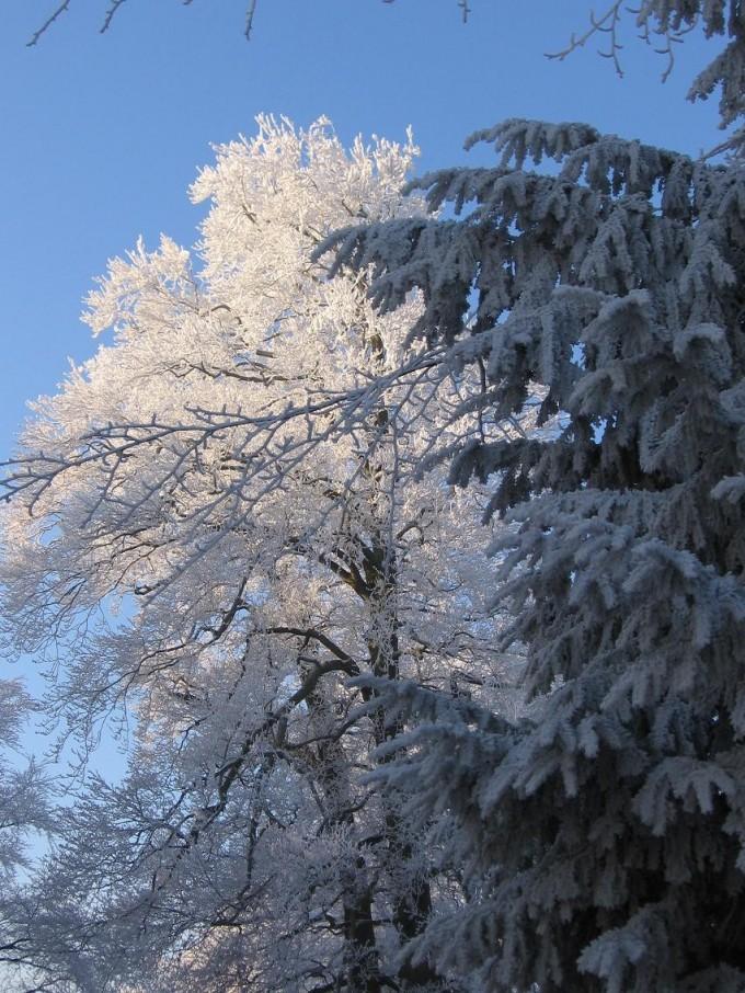 Clingendael winter 231207 016