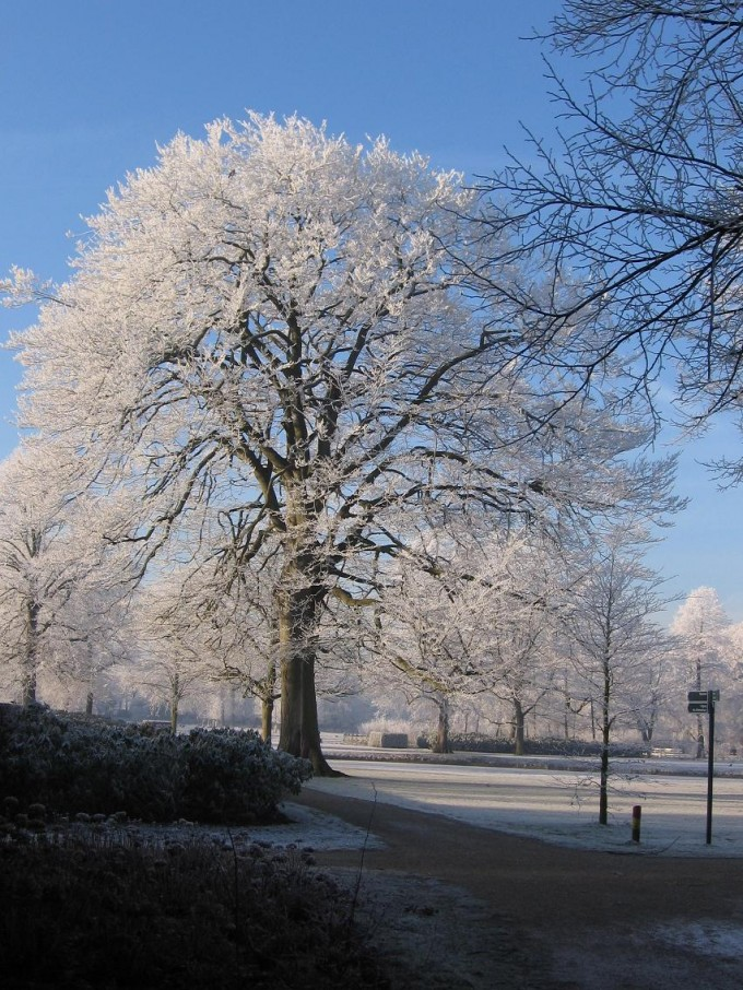 Clingendael winter 231207 017