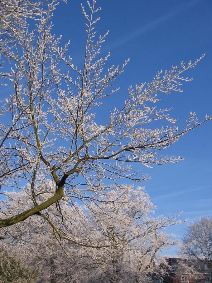 Clingendael winter 231207 018