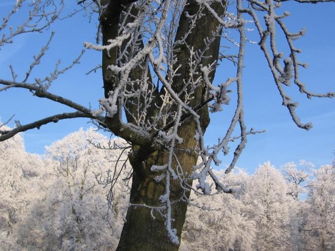 Clingendael winter 231207 021