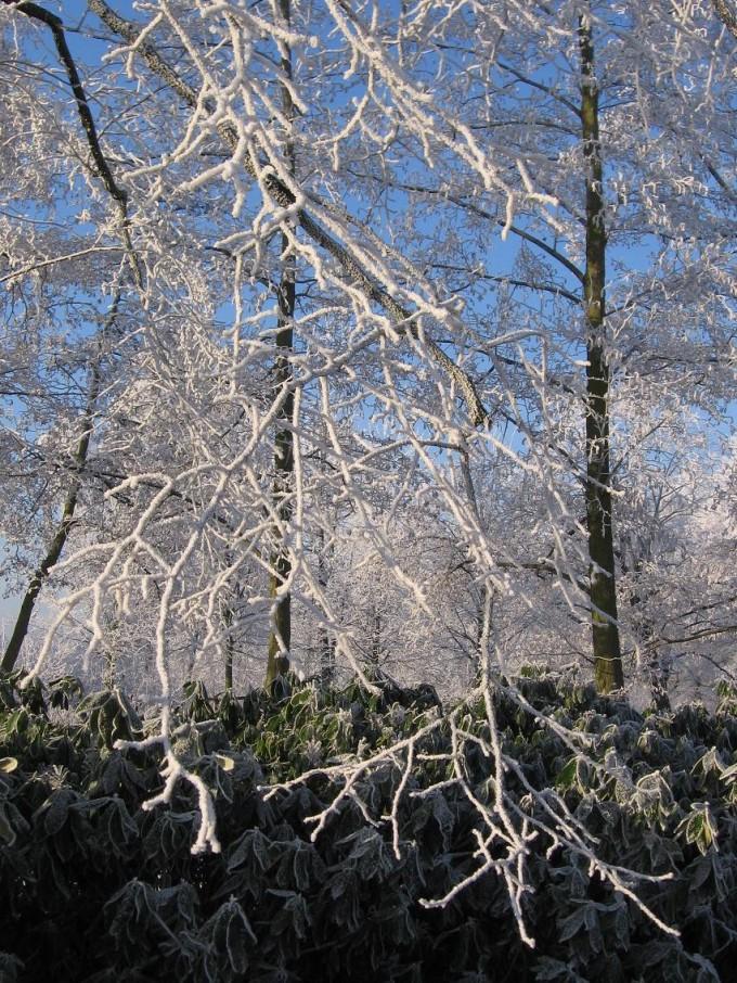 Clingendael winter 231207 022