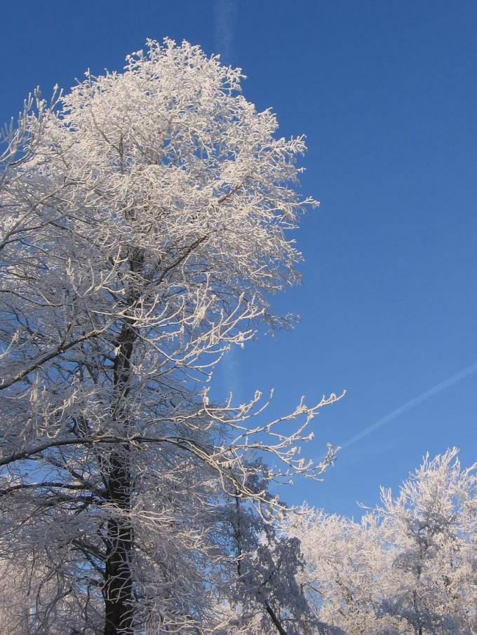 Clingendael winter 231207 023