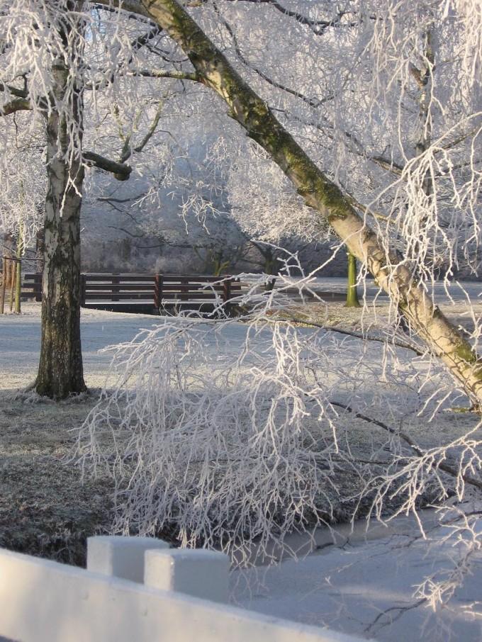 Clingendael winter 231207 025