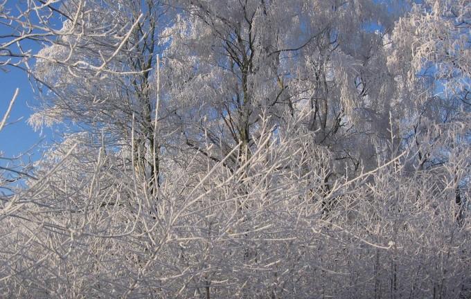 Clingendael winter 231207 028