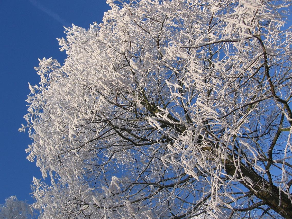 Clingendael winter 231207 030