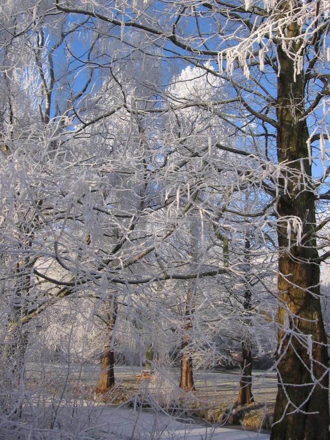 Clingendael winter 231207 031