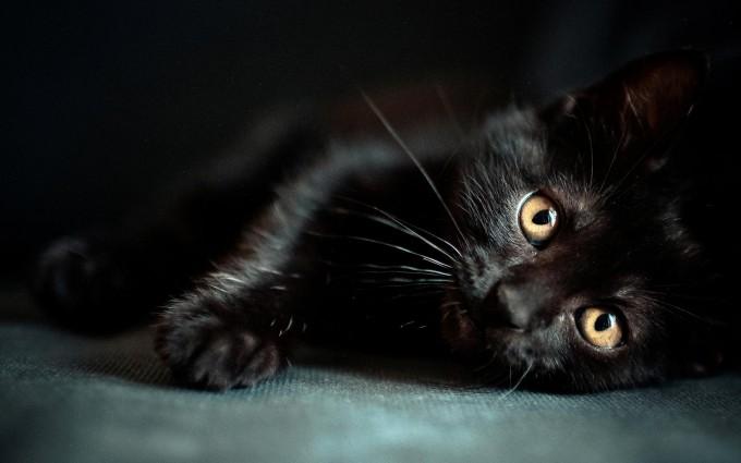 zwarte kat wallpapersource.co