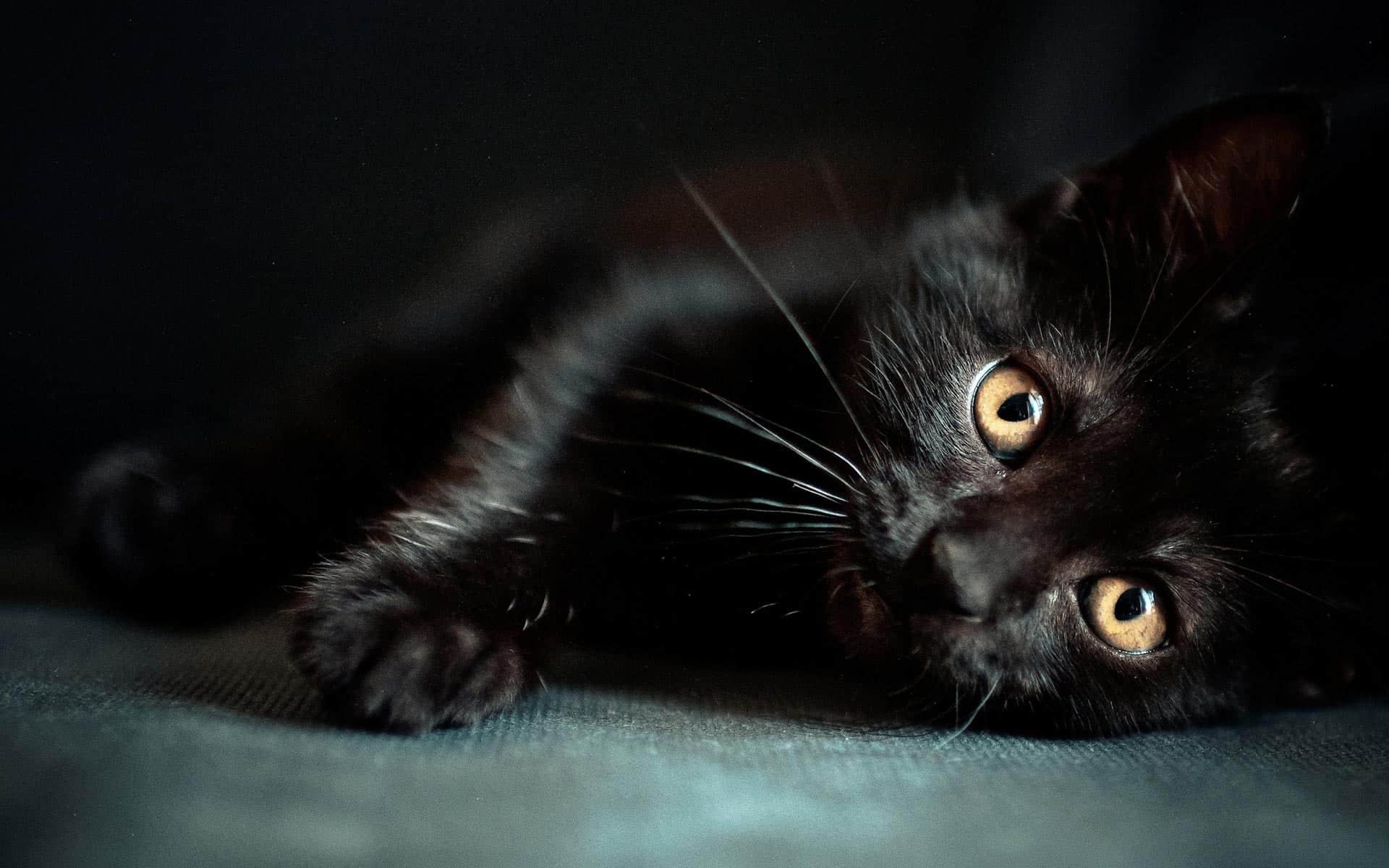 Zwarte Kat Breien Met Gratis Patroon Hobbyblogonl