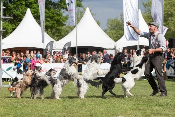 Animal Event / huisdieren evenement