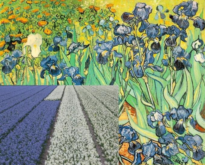 Keukenhof Van Gogh Irissen