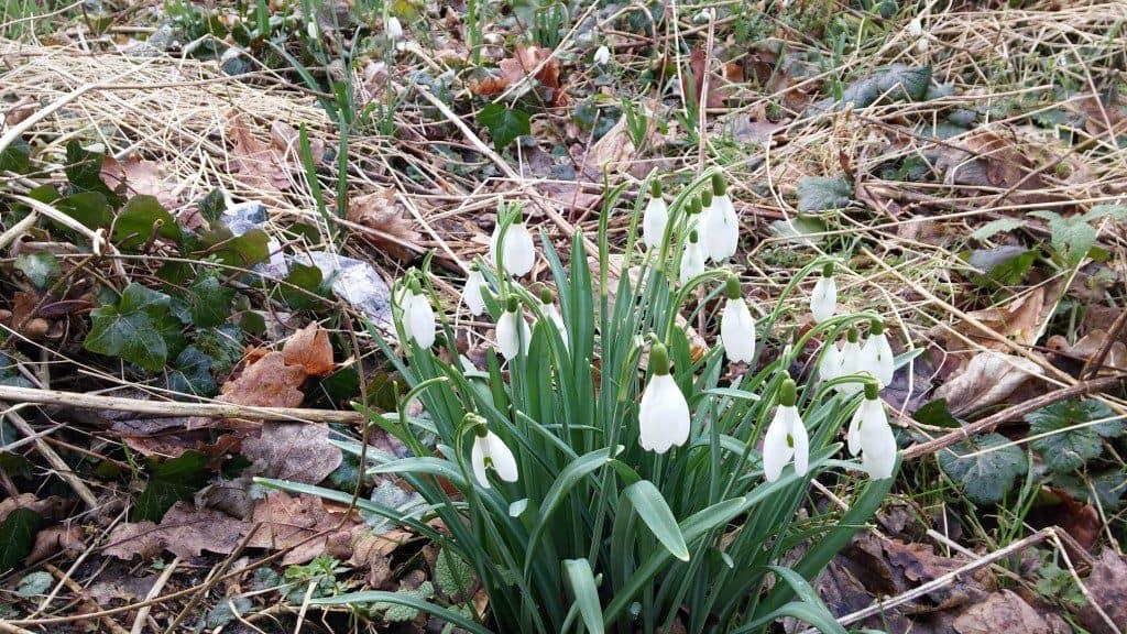 Creatief aan de slag met de lente