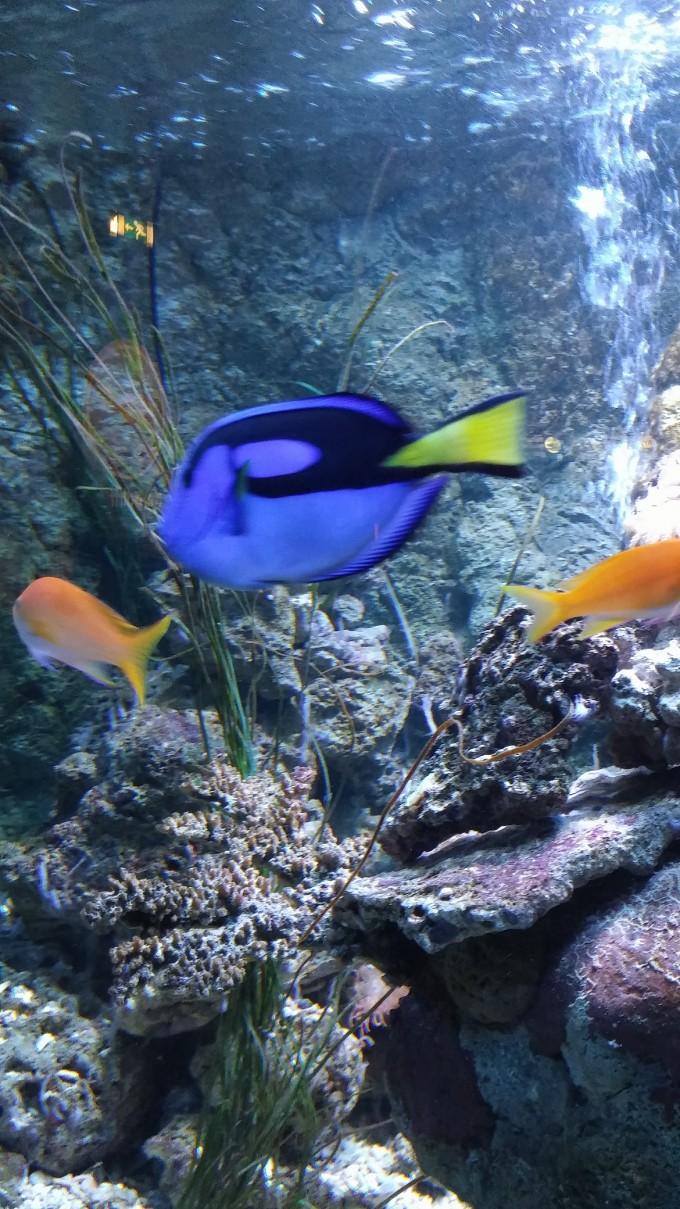 eropuit zee aquarium Scheveningen 5a