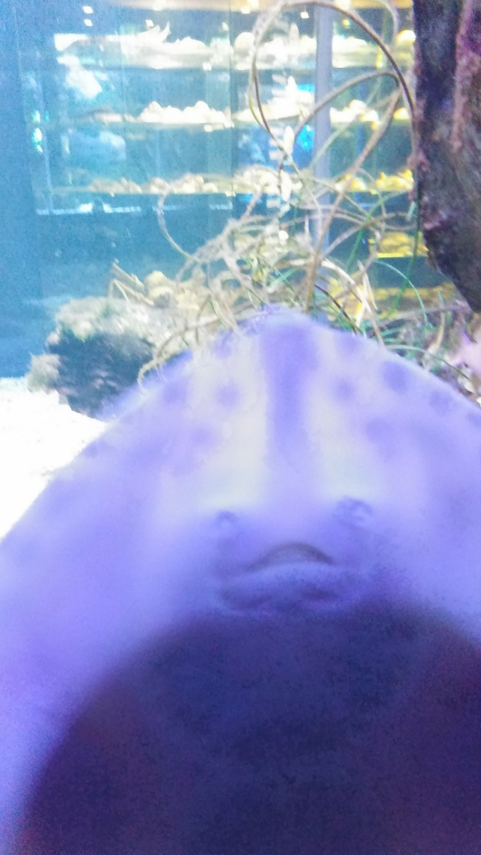 eropuit zee aquarium Scheveningen 9a