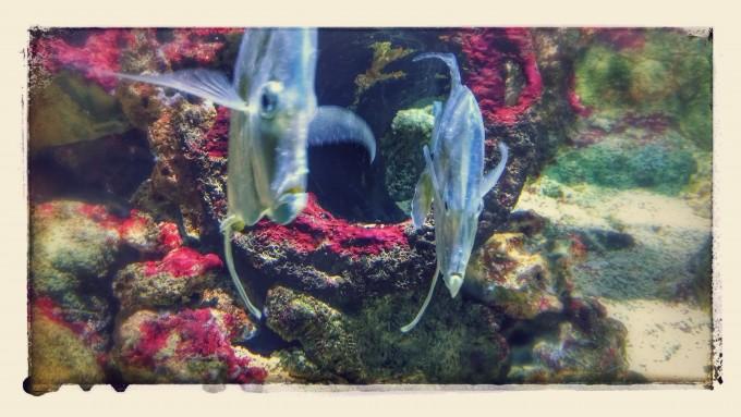 eropuit zee aquarium Scheveningen Sea Life 1